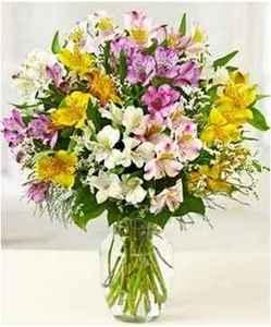 alstroemeria flower meaning  alstroemeria colors  alstroemeria bulbs  alstroemeria care  alstroemeria not flowering  alstroemeria white  alstroemeria seeds  alstroemeria cats