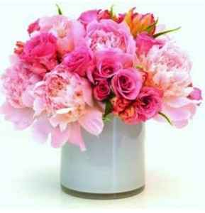 peonies for sale  growing peonies in pots  peonies bouquet  peonies white  peonies season  peonies pronunciation  types of peonies  peonies meaning