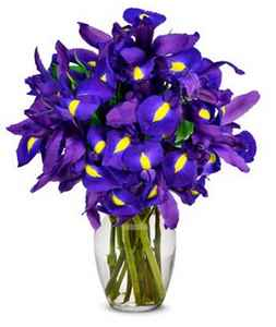 catonsville florist  blue iris flowers dc  florist in arbutus md  flower delivery  blue flowers  rutland beard florist  blue iris flower meaning  from you flowers