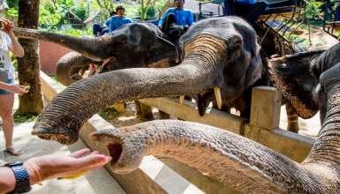 Best Zoo In Phuket