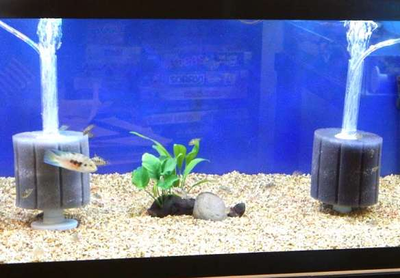 Filtration Systems For Aquariums