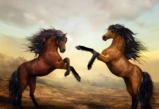 The Best Equestrian Educational Courses and Training Programs