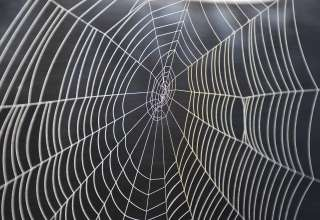 How to Eradicate Spiders from Your Home