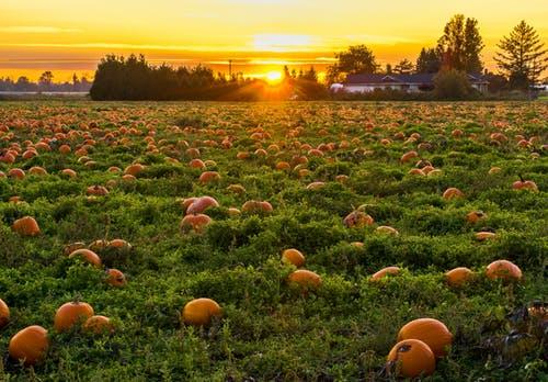 Fruit Farm Operator