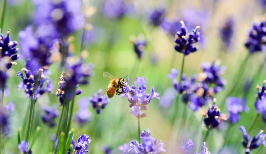 How to Create a Bee-Friendly Garden
