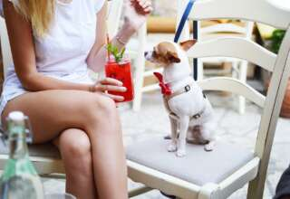 5 Things to Look for When Buying Pet-Friendly Furniture